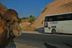 OzBus, London - Sydney mit dem Linienbus