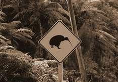 Vorsicht-Kiwi