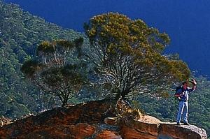 Yengo Nationalpark in den Blue Mountains